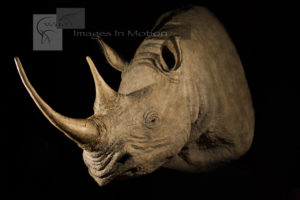 Black Rhino Reproduction