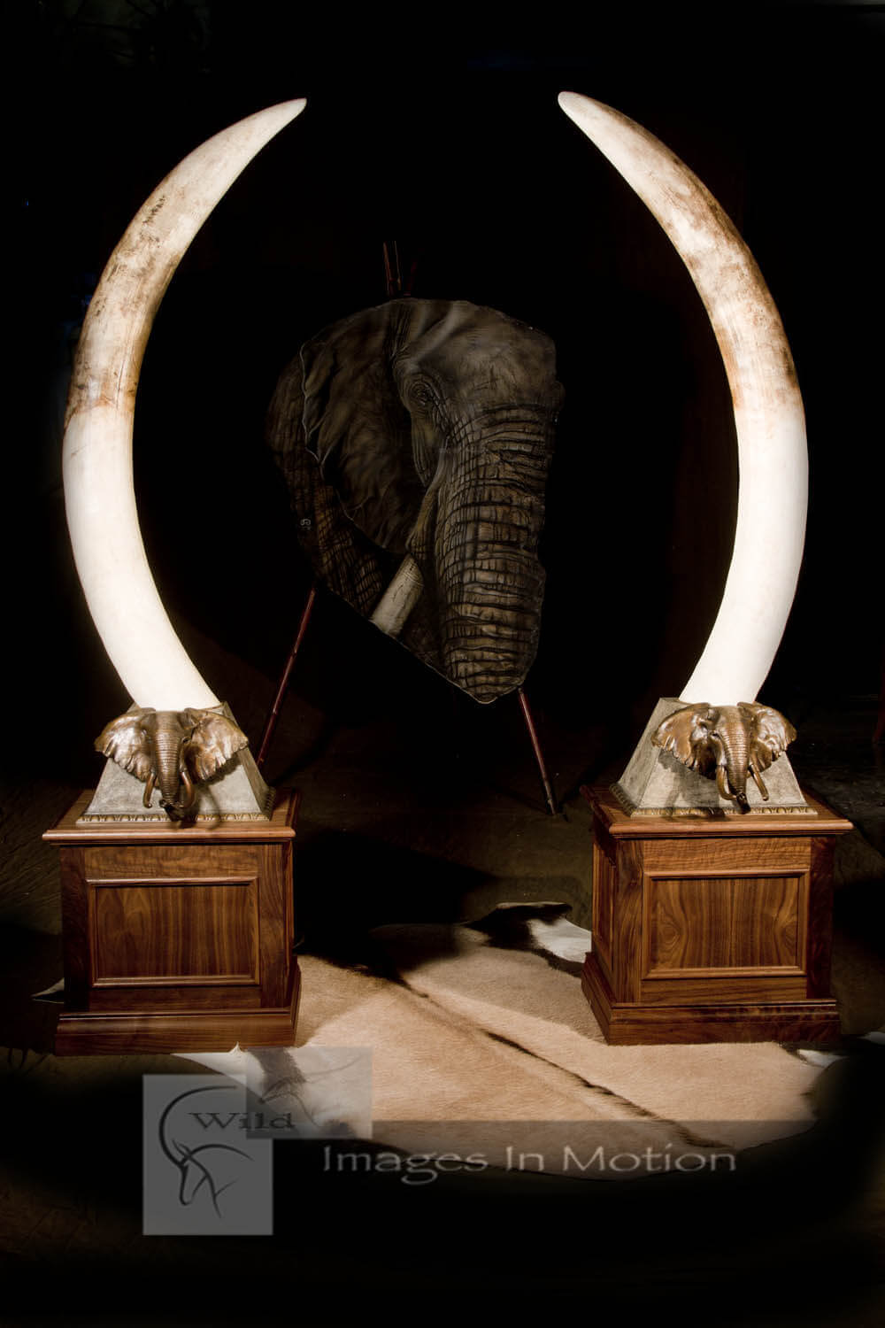 elephant-tusks-with-custom-bronze-and-walnut-bases