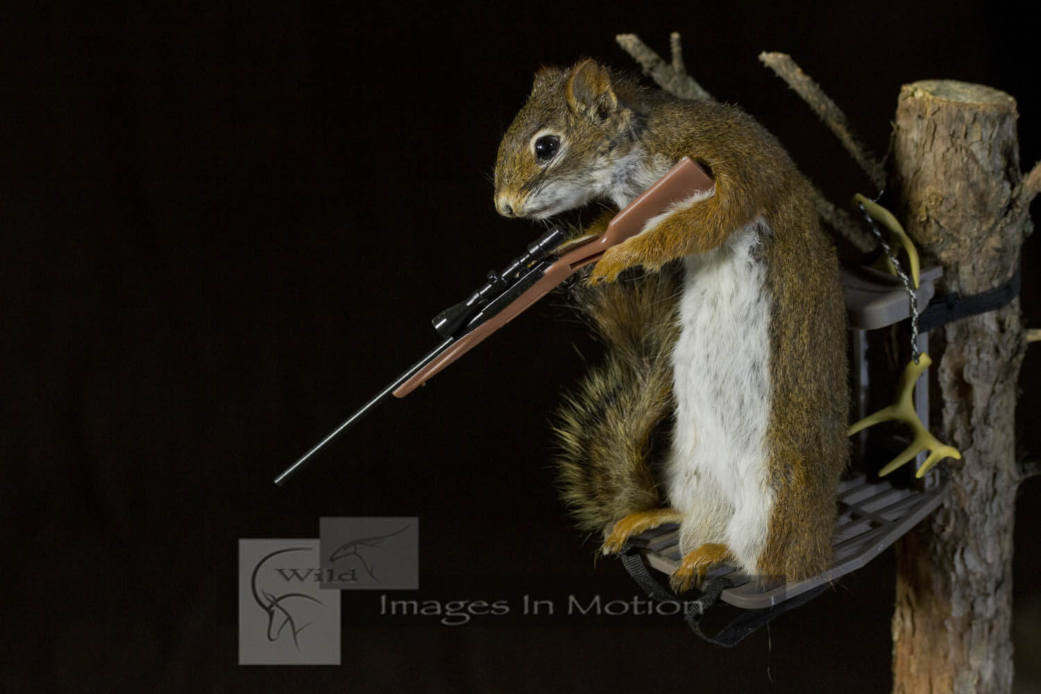 red-squirrel-in-deer-stand