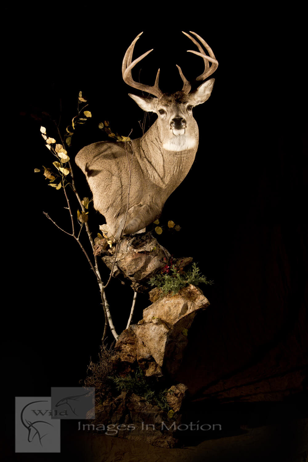 whitetail-deer-natural-floor-pedestal