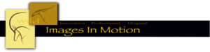 Wild Images In Motion Logo