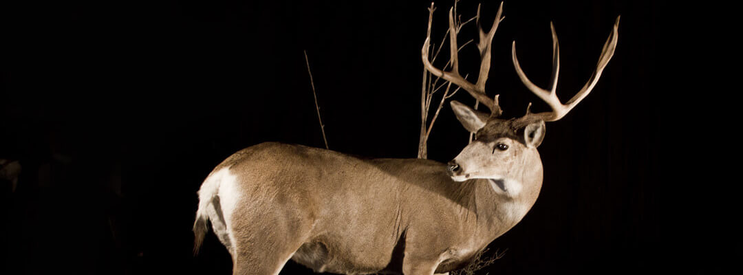 header-monster-mule-deer